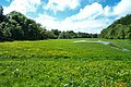 Water meadow beside Dartington driveway - geograph.org.uk - 38356.jpg