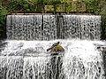 Waterfall (3298696292).jpg
