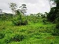 Way 2 Sholayar @ Sholayar Reserve Forest - panoramio (3).jpg