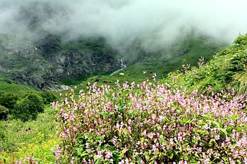 Way at Valley of Flowers.jpg