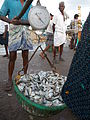 Weighing each sardine basket at Rameswaram port in India..JPG