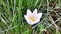 White flower centered.jpg