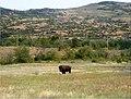 Wichita Mountains Wildlife Refuge, OK - panoramio (9).jpg