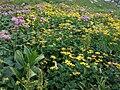 Wielicki Ogród a2.jpg