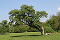 Wien-Hietzing - Naturschutzgebiet 1 - Lainzer Tiergarten - Bischofswiese.jpg
