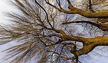 Branches d'un arbre, l'ensemble tirant sur le rouge. Un tronc envoie vers le ciel une multitude de branches qui s'étalent sur le ciel, et sur la photo.