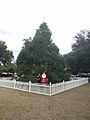 Winter Park Christmas Tree Number 1 (30769278403).jpg