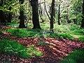 Wombwell Wood - geograph.org.uk - 57923.jpg