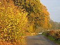 Wood and Country Lane in Autumn - geograph.org.uk - 135698.jpg