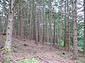Woodland, Dunmore Hill - geograph.org.uk - 522564.jpg
