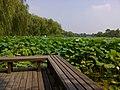 Wuzhong, Suzhou, Jiangsu, China - panoramio (255).jpg