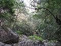 Yagur – Nesher, the Green Path – Mount Carmel 054.JPG