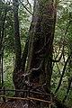 Yakusugiland (4183115628).jpg