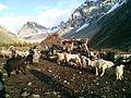 Yasin Valley Pakistan.JPG