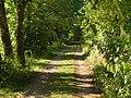 Yeşil Yol... - panoramio.jpg