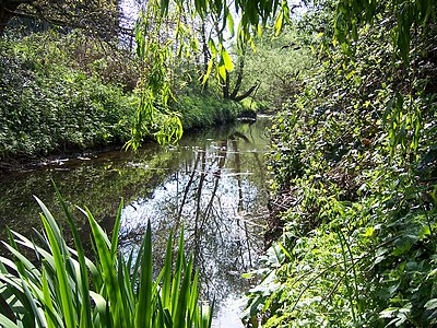 The Yeading Brook flowing through Ruislip Gardens