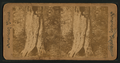 Yosemite Valley, from Robert N. Dennis collection of stereoscopic views.png
