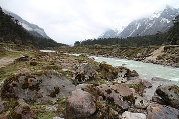 Yumthung Valley 3.jpg