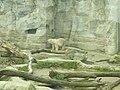 Zoo am Meer 2008 PD 10.JPG