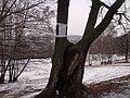 """парковое меню"" - panoramio.jpg"