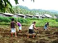 """Students gardening"" at the Stuyvenberg Rural Training Centre, picture taken presumably in 2011, by Marist Fr. David John Galvin in Solomon Islands.jpg"