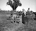 """""""Trženje"""" grozdja. Trgačica je prinesla """"kalau"""" polno grozdja in """"veselco"""" (vejo grozdja), Slap 1958.jpg"""