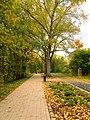 (PL) Polska - Warmia - Ścieżka nad jeziorem Długim w Lesie Miejskim w Olsztynie - Path on the Long Lake in the City Forest in Olsztyn (9.X.2012) - panoramio (2).jpg
