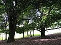 Árvores na Serra do Cipó.jpg