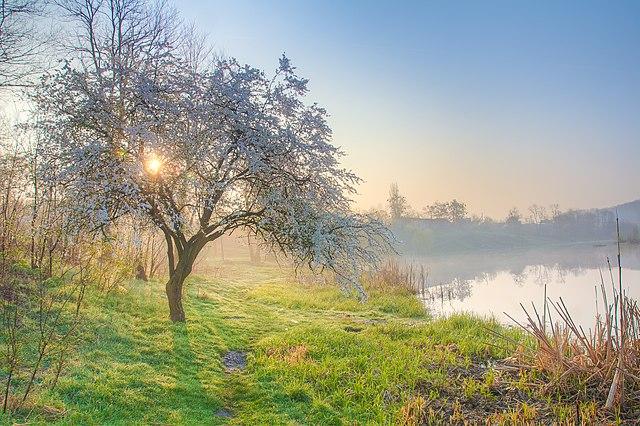 Весняний світанок на Тетереві, © Horker, CC-BY-SA 3.0