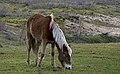 Два друга - two friends (16645634015).jpg