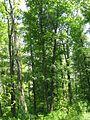 Дендрологічний парк 175.jpg