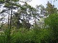 Дендрологічний парк 180.jpg