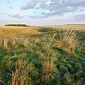 Карстовый лог. Буртинская степь - panoramio.jpg