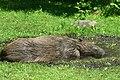 Київський зоопарк DSC 0210.jpg
