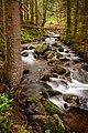 Лісовий потік - річка у околицях с. Дземброня.jpg