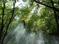 Наш ліс.png