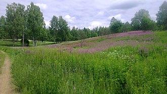 Kunyinsky District - Landscape in Kunyinsky District