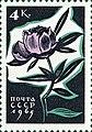 Почтовая марка СССР № 3194. 1965. Цветы.jpg