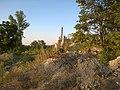 Пустырь вблизи карьера - panoramio (2).jpg