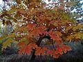 Різнобарв'я осені1.jpg