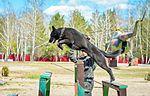 Собаки НГУ 5064 (19168535119).jpg