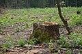 Сосново-дубові насадження, Пісківка 05.jpg