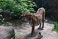Тигр DSC 0221.jpg