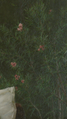 Цветы на картине В тёплых краях.png