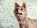 حیوانات تاکسی درمی شده - موزه تاریخ طبیعی شهر قم 15.jpg