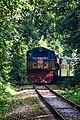 রেলগাড়ি, বাংলাদেশ রেলওয়ে, লাউয়াছড়া জাতীয় উদ্যান থেকে (আলোকচিত্রীঃ প্রত্যয় হাসান).jpg