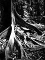 ที่ป่าคำชะโนด - panoramio.jpg
