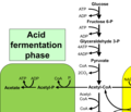アセトン-ブタノール-エタノール発酵の経路.png