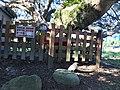 十一份集福宮榕樹下的黑冠麻鷺.jpg