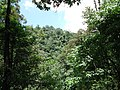 原始森林 - panoramio (2).jpg